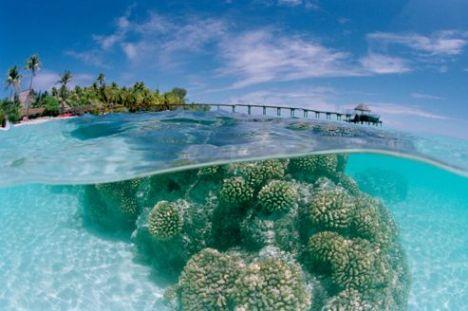 Coral at Fakarawa Beach
