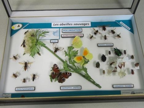 La disparition des abeilles1