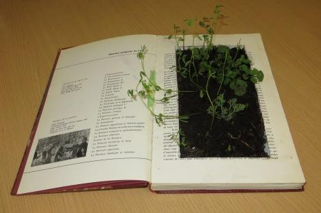 Arts, littérature et écologie6