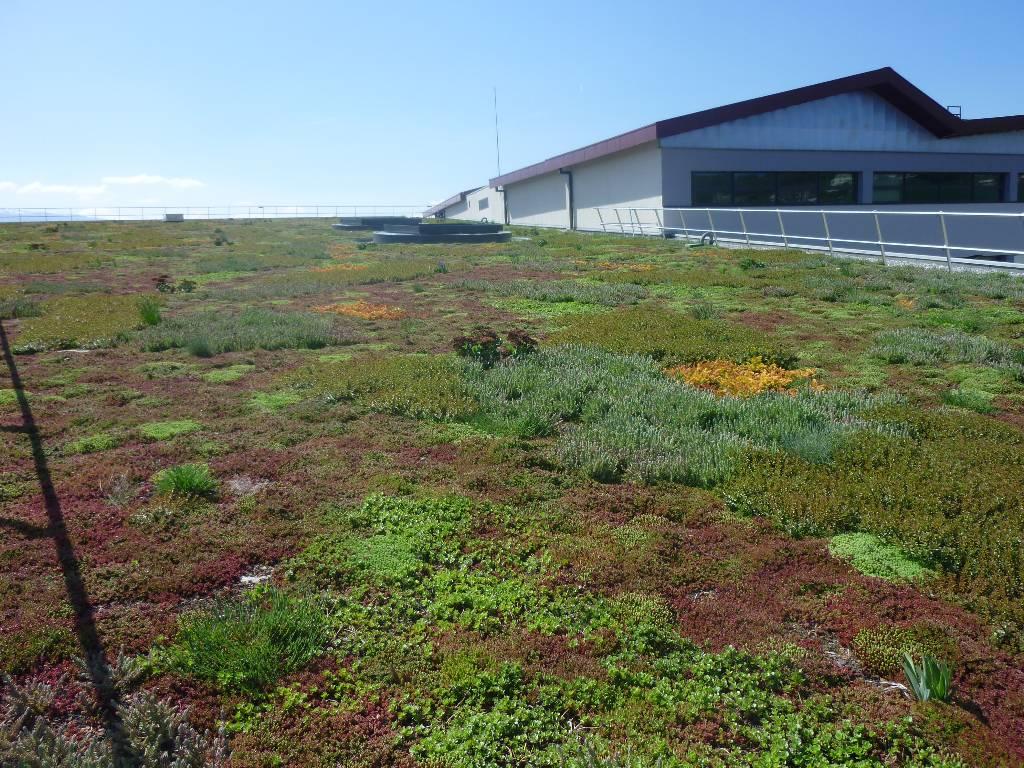 R chauffement climatique vert mongr - Entretien toit vegetalise ...