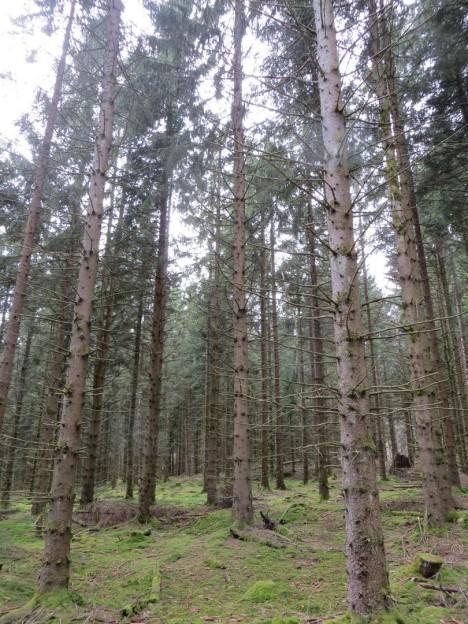 La filière du bois 1